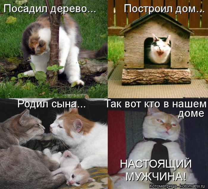 kotomatritsa_qi (700x637, 87Kb)