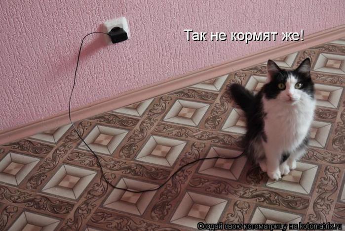 kotomatritsa_08 (700x467, 64Kb)