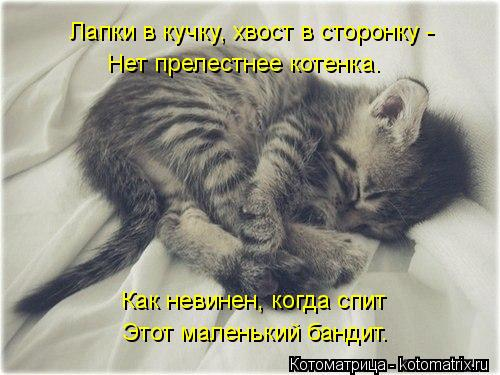 kotomatritsa_l0 (500x375, 41Kb)