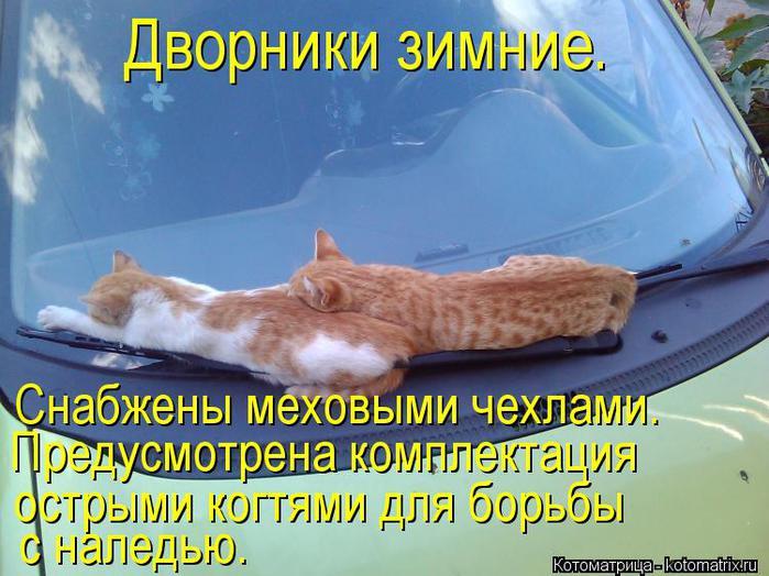 kotomatritsa_mj (700x524, 66Kb)