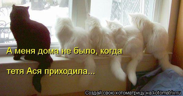 kotomatritsa_S- (599x313, 34Kb)