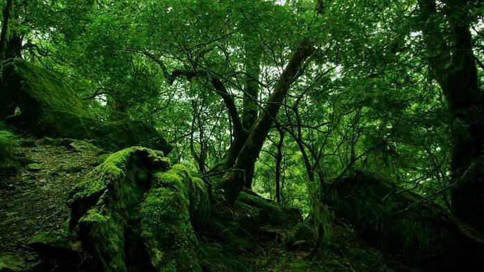 Осень фото пейзажей высокого - 15