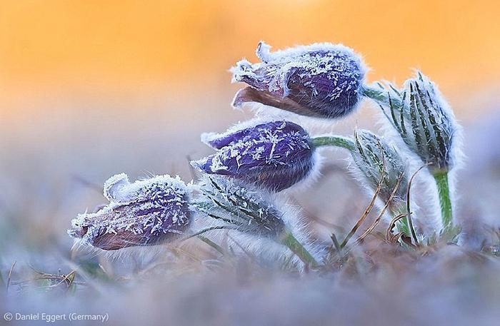 Veolia-Environnement-Wildlife-Photographer-9 (700x457, 244Kb)