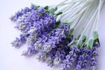 Превью 011509_lavender (540x360, 60Kb)