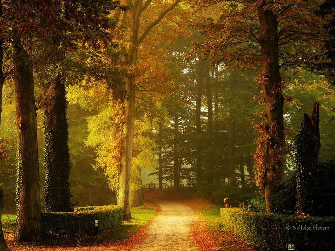 Волшебные пейзажи Неллеке Питерс