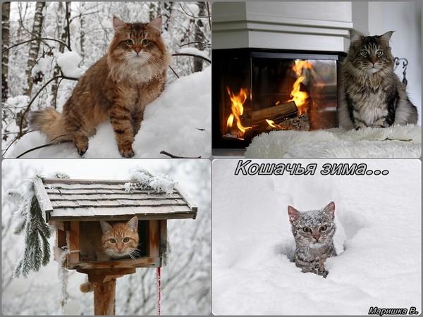 кошачья зима (600x450, 81Kb)