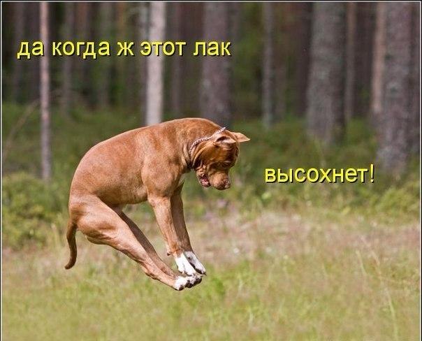 1352542838_lak_dlya_nogtey (604x488, 55Kb)