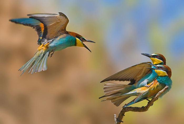 1352547206_Bird_1jpg (699x474, 32Kb)
