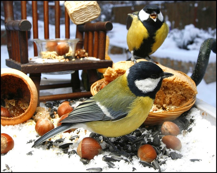 Покорми синицу зимой вспомнит тебя
