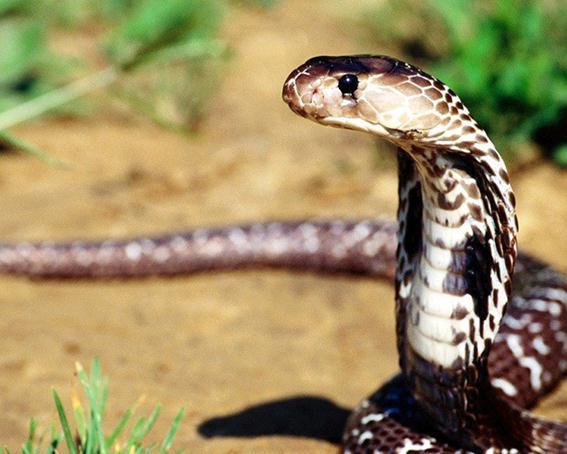 10 самых ядовитых животных в мире. Фотографии