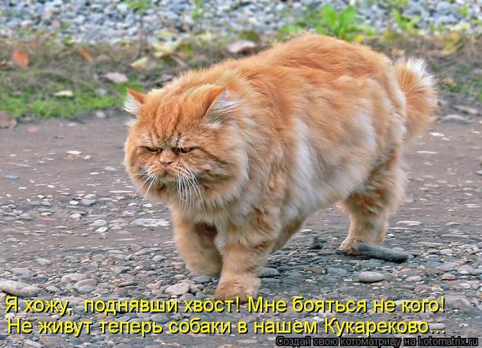 kotomatritsa_K8U (700x505, 81Kb)
