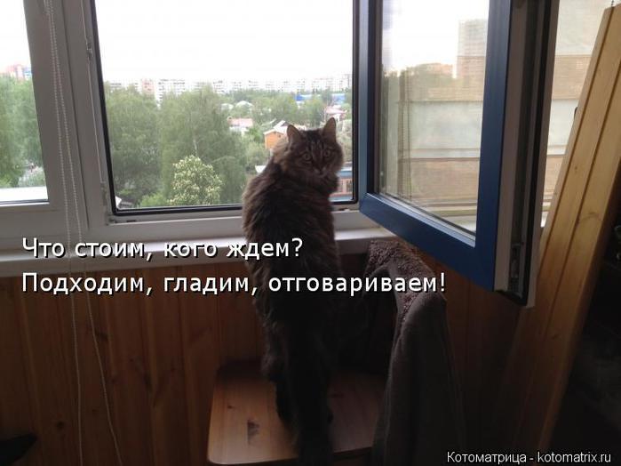 kotomatritsa_Ou (700x524, 41Kb)