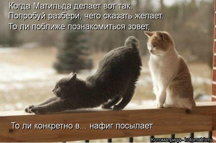 kotomatritsa_Sq (700x464, 49Kb)