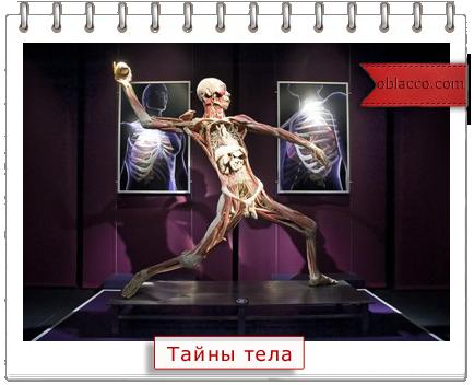 Тайны тела - выставка человеческого тела в Киеве