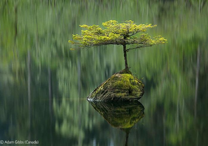 Veolia-Environnement-Wildlife-Photographer-25 (700x489, 41Kb)