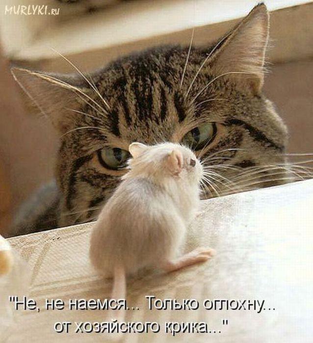 http://img0.liveinternet.ru/images/attach/c/6/93/787/93787060_4737592_kot13.jpg