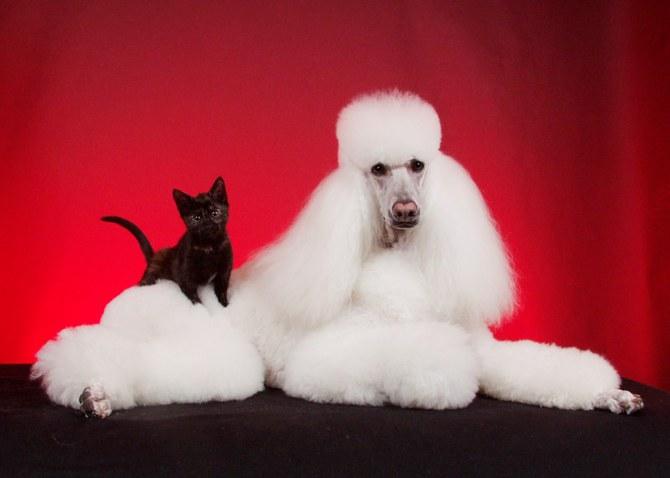 смешные животные фото Ren Netherland 3 (670x478, 40Kb)