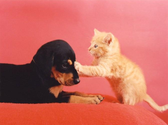 смешные животные фото Ren Netherland 6 (670x499, 39Kb)