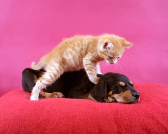 смешные животные фото Ren Netherland 8 (670x536, 55Kb)