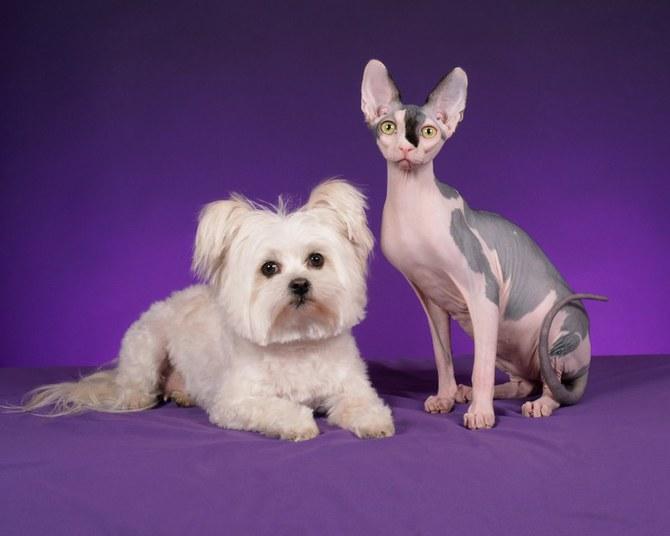 смешные животные фото Ren Netherland 18 (670x536, 44Kb)