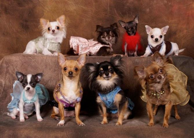 смешные животные фото Ren Netherland 23 (670x478, 78Kb)