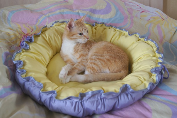 Лежанки для кошек своими руками фото