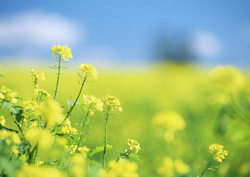 Обои полевые цветы для рабочего стола