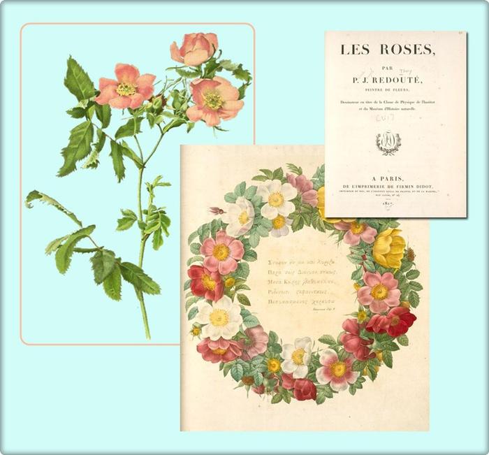 4195696_roses (700x651, 125Kb)