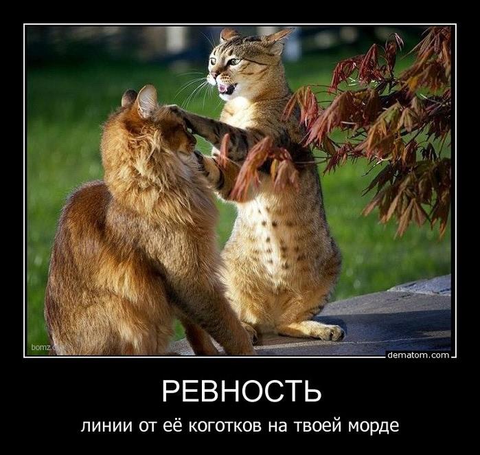Ревность у кошек))