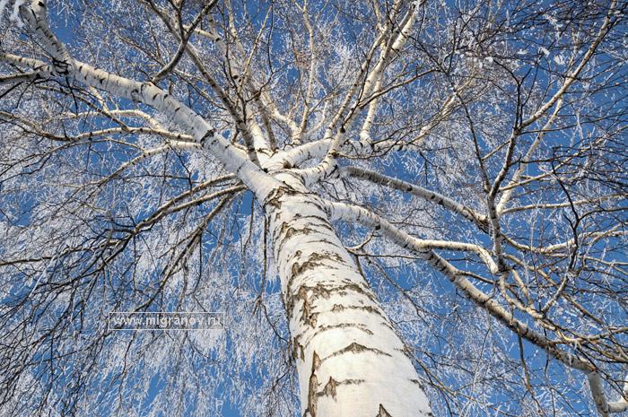 winter_shine (700x465, 226Kb)