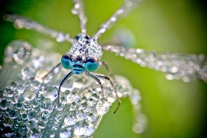 David_Chambon_insects_1 (700x467, 86Kb)