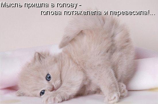 1224889557_34 (550x361, 26Kb)