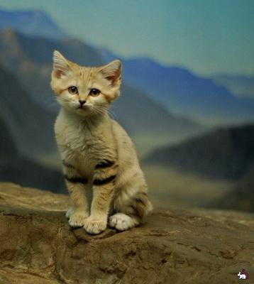 5 интересных фактов о кошках (358x400, 45Kb)
