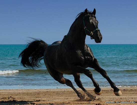 1246987293_horse-by-cangaroo-stunning-pictures-horse-beauty (549x421, 54Kb)