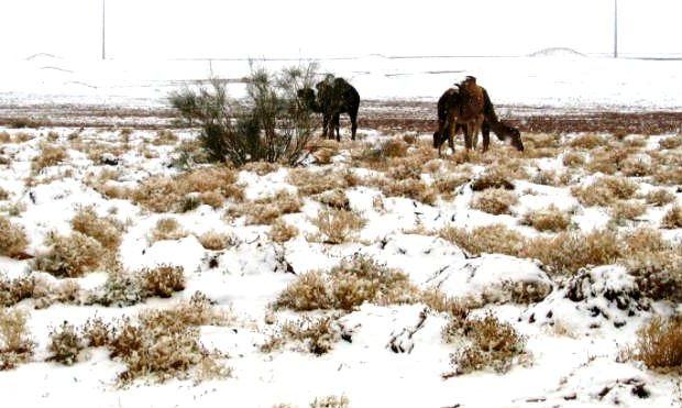 Африка в снегу 1 (620x371, 54Kb)