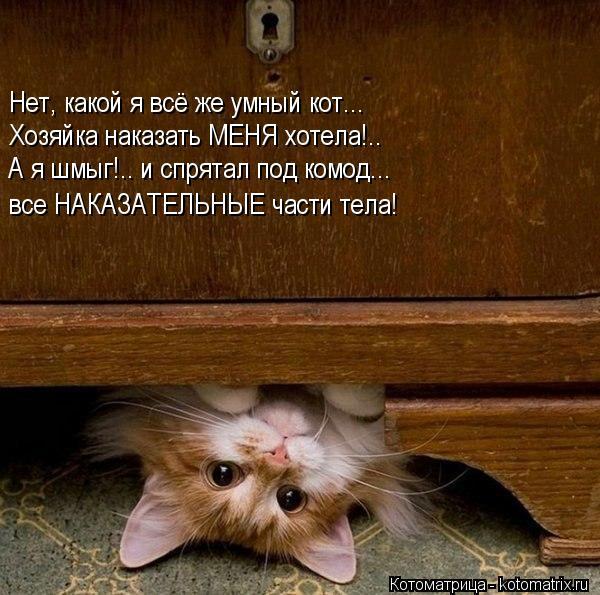 kotomatritsa_1d (600x595, 68Kb)