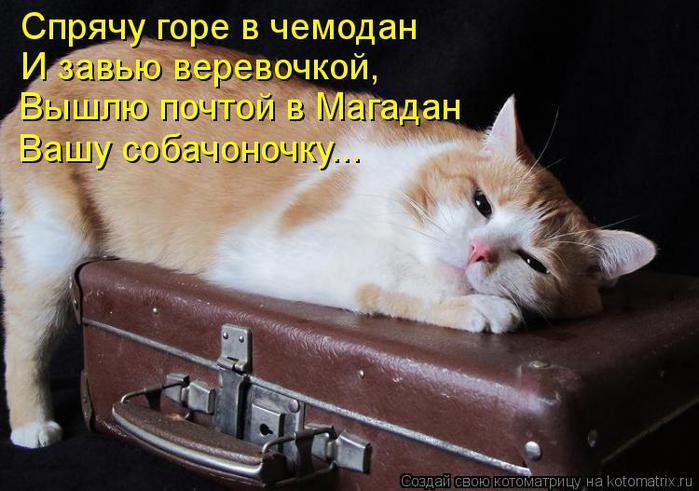 kotomatritsa_ev (700x491, 57Kb)