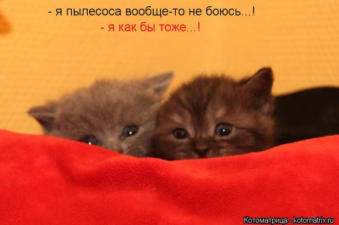 kotomatritsa_m (700x463, 29Kb)