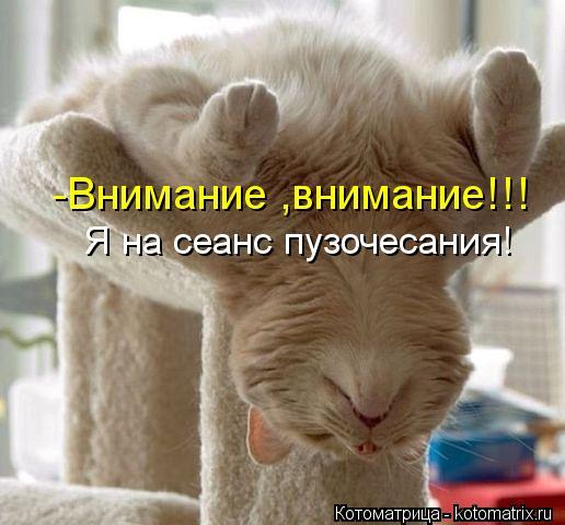 kotomatritsa_ORW (516x480, 40Kb)