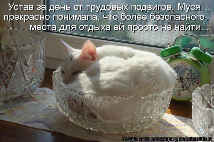 kotomatritsa_uS (700x466, 63Kb)