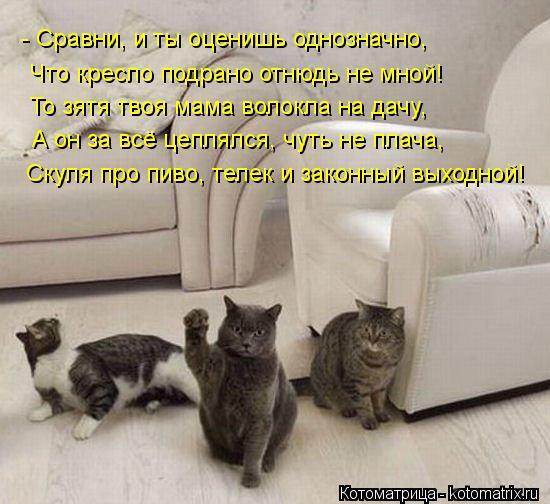 kotomatritsa_-W (550x504, 50Kb)