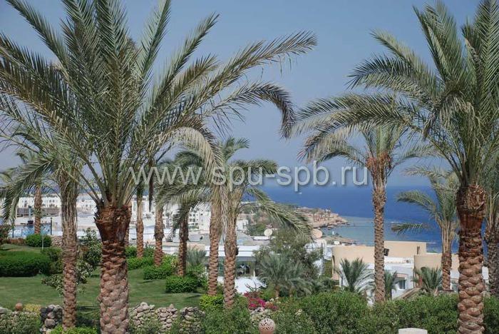 territoriya_otelya_egipet (700x468, 152Kb)