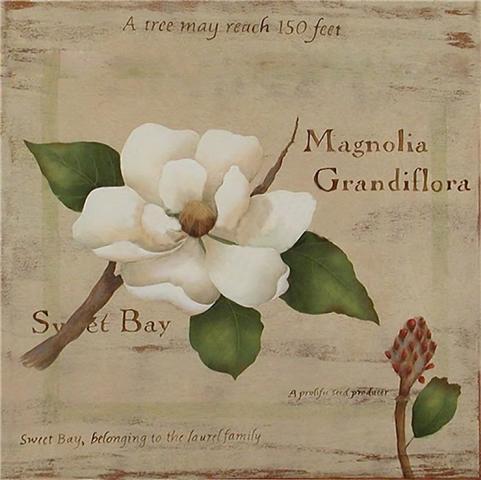 85705506_large_magnolia_perfecta_en_40x40 (481x480, 32Kb)
