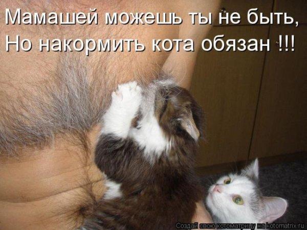 1308903139_kotomatrix_17 (600x450, 54Kb)
