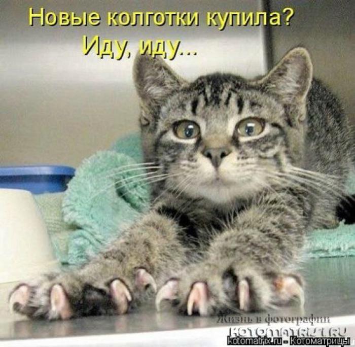 4979645_1342350743_cats_kotomatrisi34_1 (700x684, 69Kb)