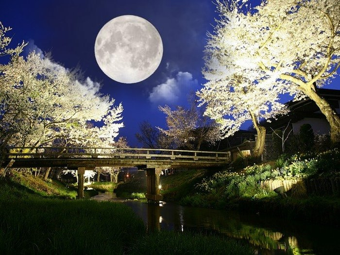 лунный-календарь-огородника (600x525, 123Kb)
