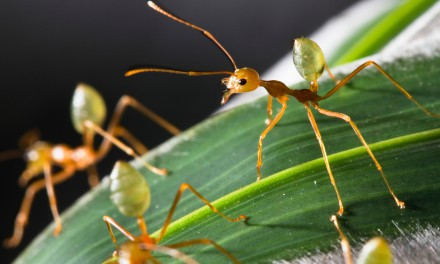 ants-440x264 (440x264, 32Kb)