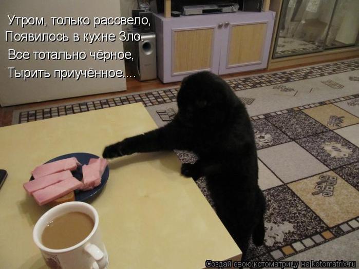 kotomatritsa_wr (700x524, 51Kb)