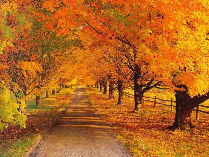 autumn_photo_21 (700x525, 125Kb)