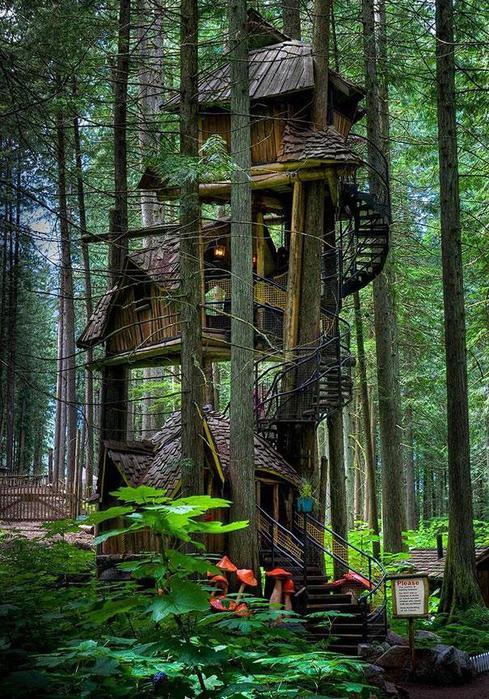 Причудливый трехэтажный дом в дереве в Канаде (489x700, 114Kb)